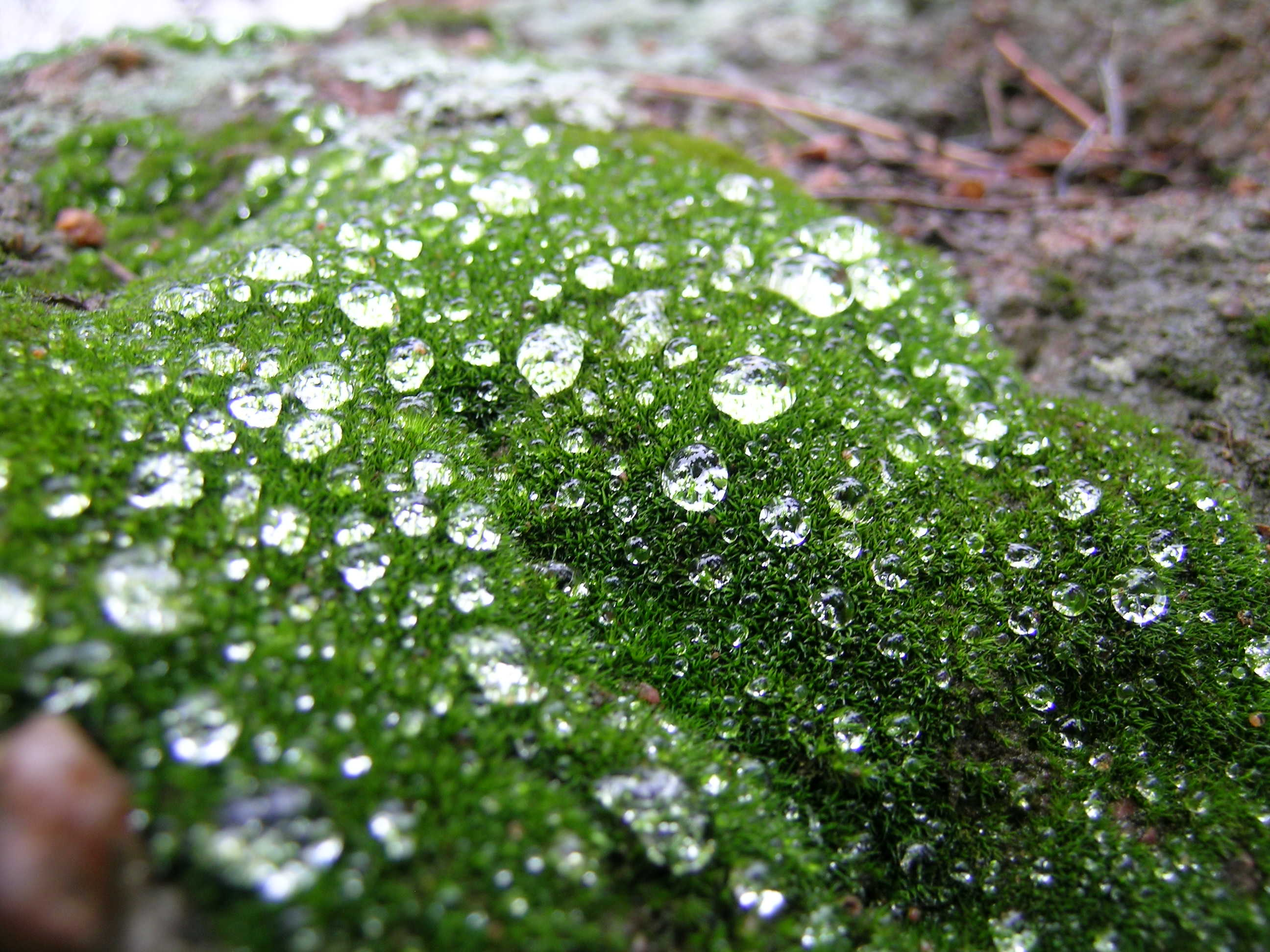 Liquid Diamonds in Moss, Chautauqua Park, Boulder